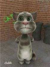 Игры на java cats